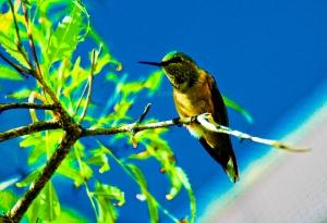 HummingbirdPerching