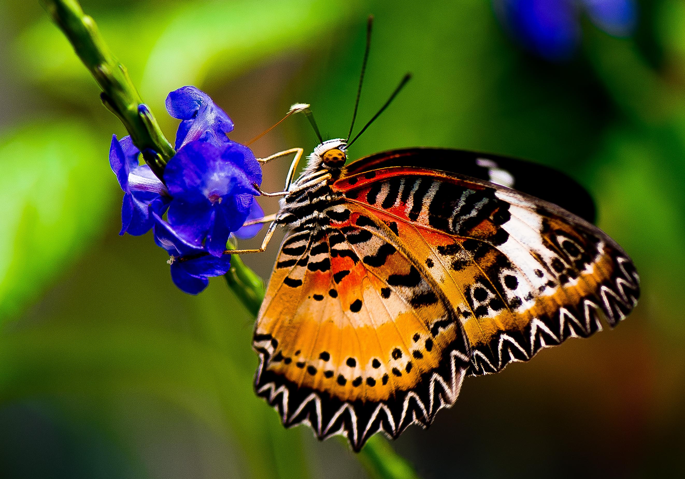 ButterflyBlueFlower2
